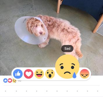 Smutny pies i reakcje na Facebooku